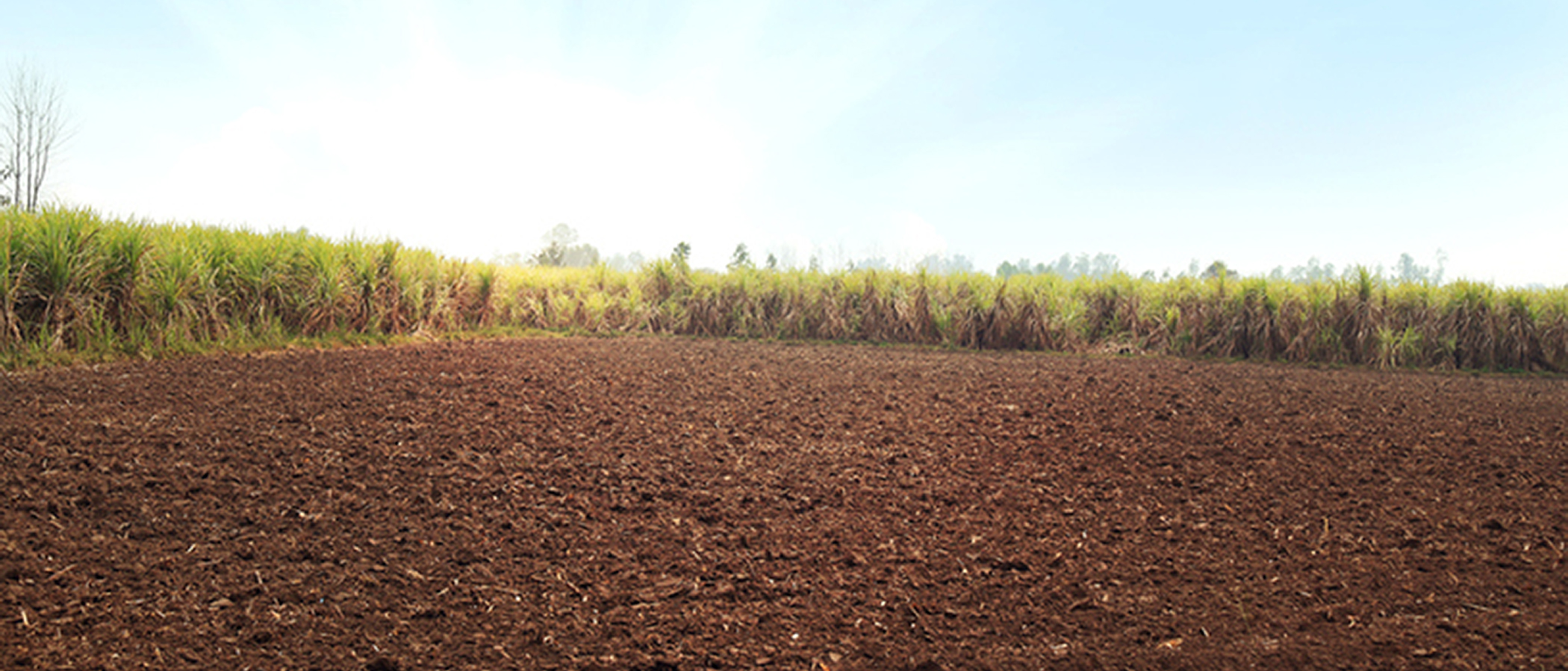 Ground of mulch