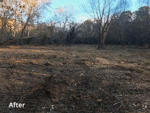 Image of land after land clearing
